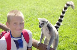 Boy with Ring-Tailed Lemur Royalty Free Stock Images