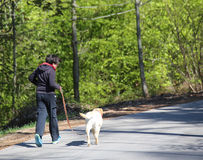 boy running down the road with his dog Labrador Retriever Stock Image