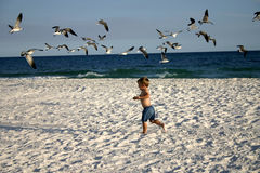 Boy running into flock of bird Royalty Free Stock Images