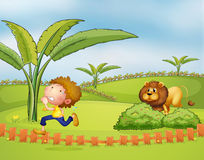 A boy running followed by the lion Royalty Free Stock Images