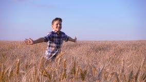 Boy running on golden wheat field, slow motion stock video