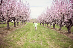 Boy running in Peach orchard Stock Photos
