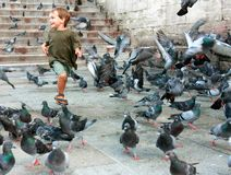Boy running among pigeons Stock Image