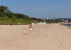 Boy running after seagulls on the beach Stock Image