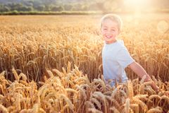 Boy running and smiling in wheat field in summer sunset royalty free stock photo