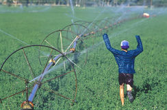 Boy running through sprinklers. Royalty Free Stock Image