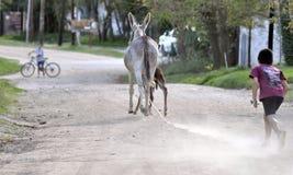 Boy running towards a donkey royalty free stock image