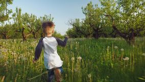 The boy runs through the dandelions for his dog. Rear view: The boy is catching up with his dog ran through the apple orchard, runs on dandelions in the spring stock video