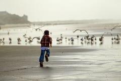 Boy runs toward seagulls. Stock Image