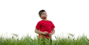 The boy in the rye field, isolated Royalty Free Stock Photos