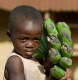 The boy's portrait with a linking of bananas who goes to the market them to sell. Royalty Free Stock Photo