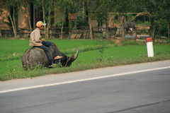 A boy is sat on the back of a buffalo at the edge of a road (Vietnam). Royalty Free Stock Images