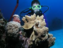 Boy scuba diver. A young boy scuba diving. He is positioned behind a coral head and underwater over 80ft deep stock photo
