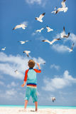 Boy and seagulls Royalty Free Stock Photos