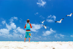 Boy and seagulls Stock Images