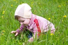 Boy searches for bug Stock Photos