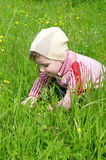 Boy searches for bug in herb Royalty Free Stock Image