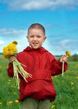 Boy searches for bug in herb on meadow Stock Images