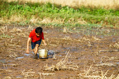 Boy searching for snails on the muddy field Stock Images