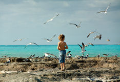 Boy by the seashore. A young boy walking on the sea shore surrounded by birds. Photo taken in Nassau Bahamas Royalty Free Stock Image