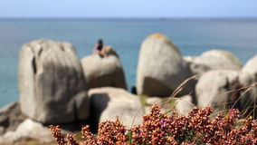 A boy is seated on a big rock above the sea. Some walkers pass by on a footpath along the shore. Heather in flower in foreground. A boy is seated on a big rock stock footage