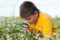 Boy sees flowers  magnifying glass Royalty Free Stock Image