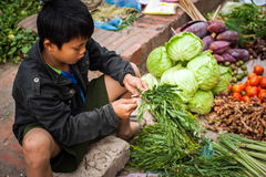 Boy selling green grocery and spices asian food market. Laos Stock Images
