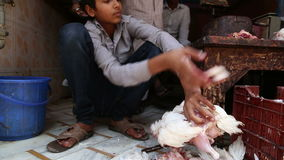 Boy separating body parts of slaughtered chicken on the floor. stock video footage