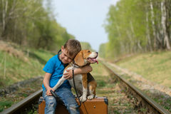 A boy seven years old walking with a Beagle in the woods in the spring. Boy European appearance walking with a Beagle and a large suitcase on the railroad tracks stock images