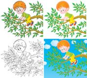 Boy shins on a branch Stock Photos