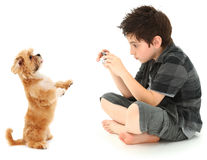 Boy Shooting Photos of His Dog with Digital Camera. Adorable 8 year old boy shooting photos of his dog with digital camera over white background royalty free stock images