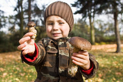 Boy showing mushrooms. A young boy showing the mushrooms he has collected Royalty Free Stock Photography