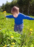 Boy sits on dandelion;. Royalty Free Stock Photos