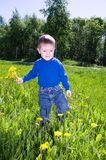Boy sits on dandelion;. Stock Photos