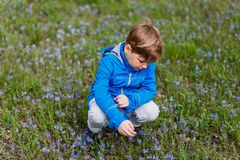 A boy sits on the flowery meadow stock photos