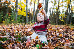 Boy Sits Holding Up Maple Leaves in his Hand Royalty Free Stock Photos