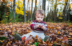 Boy Sits Inspecting a Maple Leaf royalty free stock image