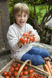 Boy (7-9) sitting on garden steps beside basket, holding fresh tomatoes, smiling, portrait Stock Images