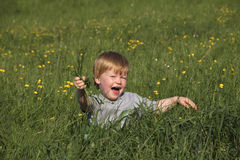 Boy is sitting in the grass Royalty Free Stock Image