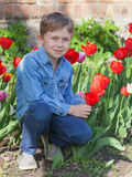 Boy sitting near red tulips Royalty Free Stock Photo
