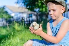 Boy Sitting Outdoors on Grass Holding Fuzzy Chick Stock Images