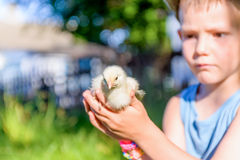 Boy Sitting Outdoors on Grass Holding Fuzzy Chick Stock Photo