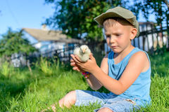 Boy Sitting Outdoors on Grass Holding Fuzzy Chick Royalty Free Stock Photo
