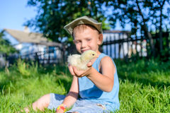 Boy Sitting Outdoors on Grass Holding Fuzzy Chick Royalty Free Stock Image