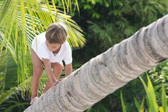 Boy sitting on palm tree Stock Image