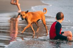 Boy Sitting on Seashore Beside Brown Dog at Day Time royalty free stock photo