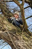 Boy sitting on tree Royalty Free Stock Image