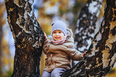 Boy sitting on a tree Royalty Free Stock Images