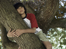 Boy (10-12) sitting in tree in park, close-up, portrait, low angle view Royalty Free Stock Image
