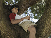 Boy (10-12) sitting in tree in park, listening to MP3 player, smiling, low angle view Stock Photos
